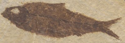 Fossil Fish, Kemmerer, Wyoming